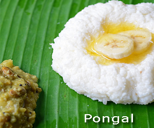 Pongal Indian Festival